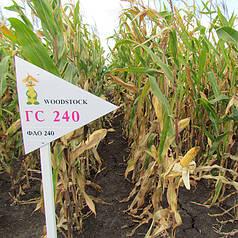 Гибрид кукурузы Вудсток ГС 240 - ФАО 240 (2018)