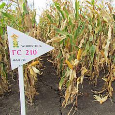Гибрид кукурузы Вудсток ГС 210 - ФАО 210 (2018)