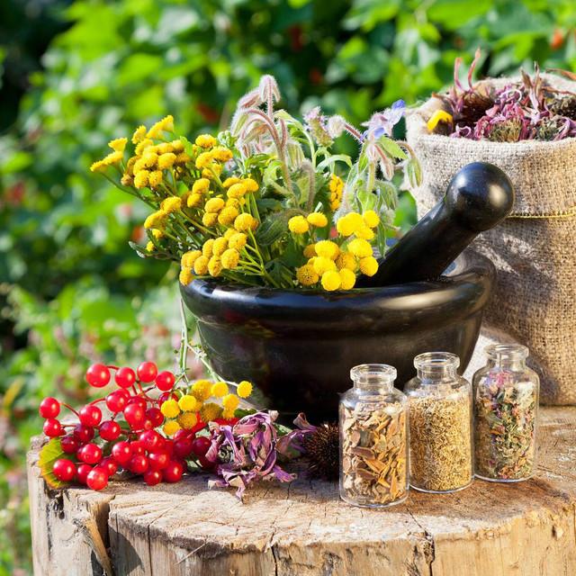 Соцветия, листья и травы