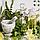 Фитокрем Косметический (белая лилия) 30 г., фото 5