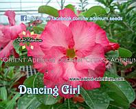 Адениум семена Dancing Girl