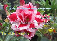 Адениум семена Twinkle Twinkle