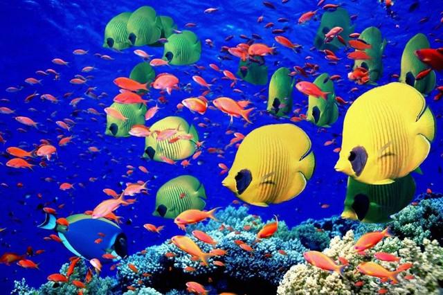 Товары для морской аквариумистики