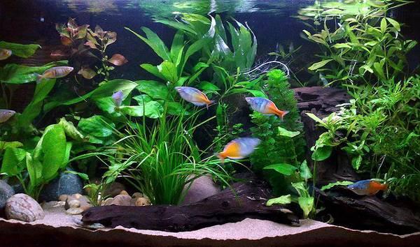 Товары для пресноводной аквариумистики