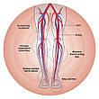 Массажер нейростимулятор Circulator HoMedics, фото 5
