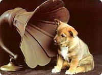 Как животные слышат музыку