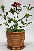 Керамический горшок для комнатных растений оптом.