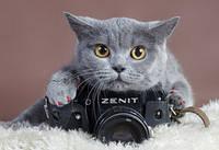 Фотографируем! Или «охотимся» на животных