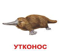 """Обучающие карточки Домана. Карточки большие ламинированные русские с фактами """"Экзотические животные"""", 20 шт."""