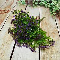 Укроп фиолетовый