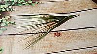 Берграс трава