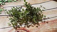 Пик Эвкалипта зеленый
