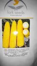 Насіння Кукурудза Добриня Ф1 Dobrinya F1 США, Lark Seeds