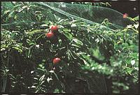 Сетка защита от птиц ORTOFLEX зелёная, размер: ячейки 12х10мм, рулона 250х4м - Италия