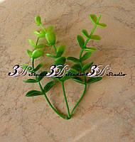 Добавка эвкалипт круглые листья тройная