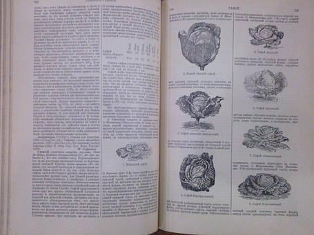 Полная история русского сельского хозяйства 1900 год, фото 2