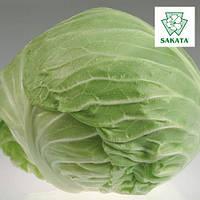 Семена капусты Монро F1 / Monro F1 от компании Саката (Sakata), Япония, 1000 семян