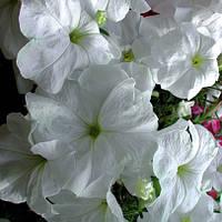 Семена цветов петунии Лавина F1 лососевая 10шт.