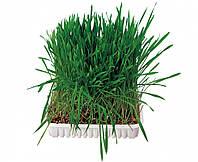 Трава Trixie Small Animal Grass для гризунів, 100 г