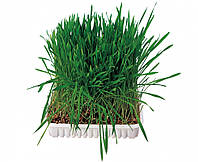 Трава Trixie Small Animal Grass для грызунов, 100 г, фото 1