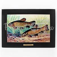 Панно настенное «Рыболовство. Линь»,38х28/20х30 см (263-6004B)