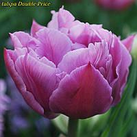 Тюльпаны Double Price (Двойная цена) 10\11 Новинка!