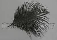 Перо страуса черное пуховое 15-20см