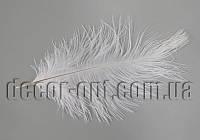 Перо страуса белое пуховое 12-18см  ІІ сорт