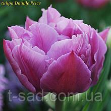 Тюльпани Double Price (Подвійна ціна) 11/12 Новинка!