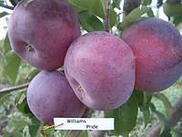 Яблуко Вильямс Прайс