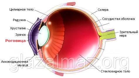 Восстановление повреждённой роговицы глаза - витамин B2