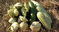 Семена кабачков, патиссонов