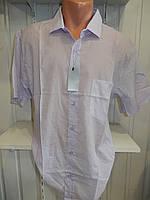 Сорочка чоловіча HIZZ короткий рукав, батал, однотонна, з кишенею 004