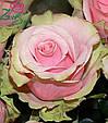 Роза Дансинг Квин, фото 2