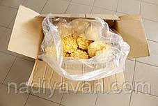 Гриб Коралловый (Серебряные ушки) 5 кг., фото 3