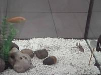 Белый песок для аквариума