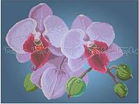Схема для вышивки бисером Цвет орхидеи (А3)