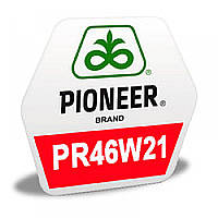 Озимый рапс ПР46В21, Пионер