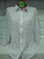 Женская блузка большой размер 29008