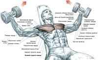 Лежачи на лаві з кутом нахилу від 45° до 60° (кут нахилу має бути менше 60° щоб уникнути занадто великої напруги дельтовидних м'язів). Гантелі тримати біля грудей в опущених вниз руках, зігнутих в ліктях, кисті знаходяться в положенні пронації - з