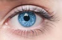 """Программа """"Лечение и профилактика Катаракты. Дегенерации сосудов сетчатки глаз"""" Бадами Арт-Лайф"""