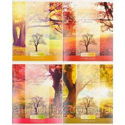 """Тетрадь цветная 60 листов, линия """"Осень"""""""