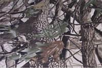 Хлопковая ткань Дубовый лес (лесной) камуфляж