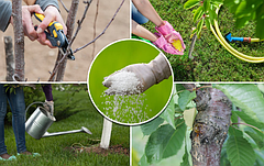 Как ухаживать за садом весной и осенью: полив, обрезка, подкормка и другие рекомендации