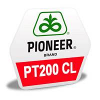 Насіння озимого ріпаку PT200CL, PIONEER