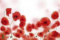 """Фотообои цветы """"Маки"""""""