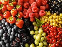 Оборудование для плодов, ягод, фруктов
