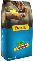 Семена Рапс озимый Эксель, среднеспелый Монсанто/насіння Ріпака озимого Ексель, 1,5 млн. нас