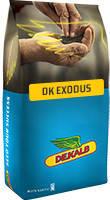 Семена Рапс озимый ДК Эксодус, Monsanto/насіння Ріпака ДК Ексодус, 1,5 млн. шт.