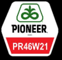 "Семена Рапса "" PR46W21 "" ( Pioneer)"